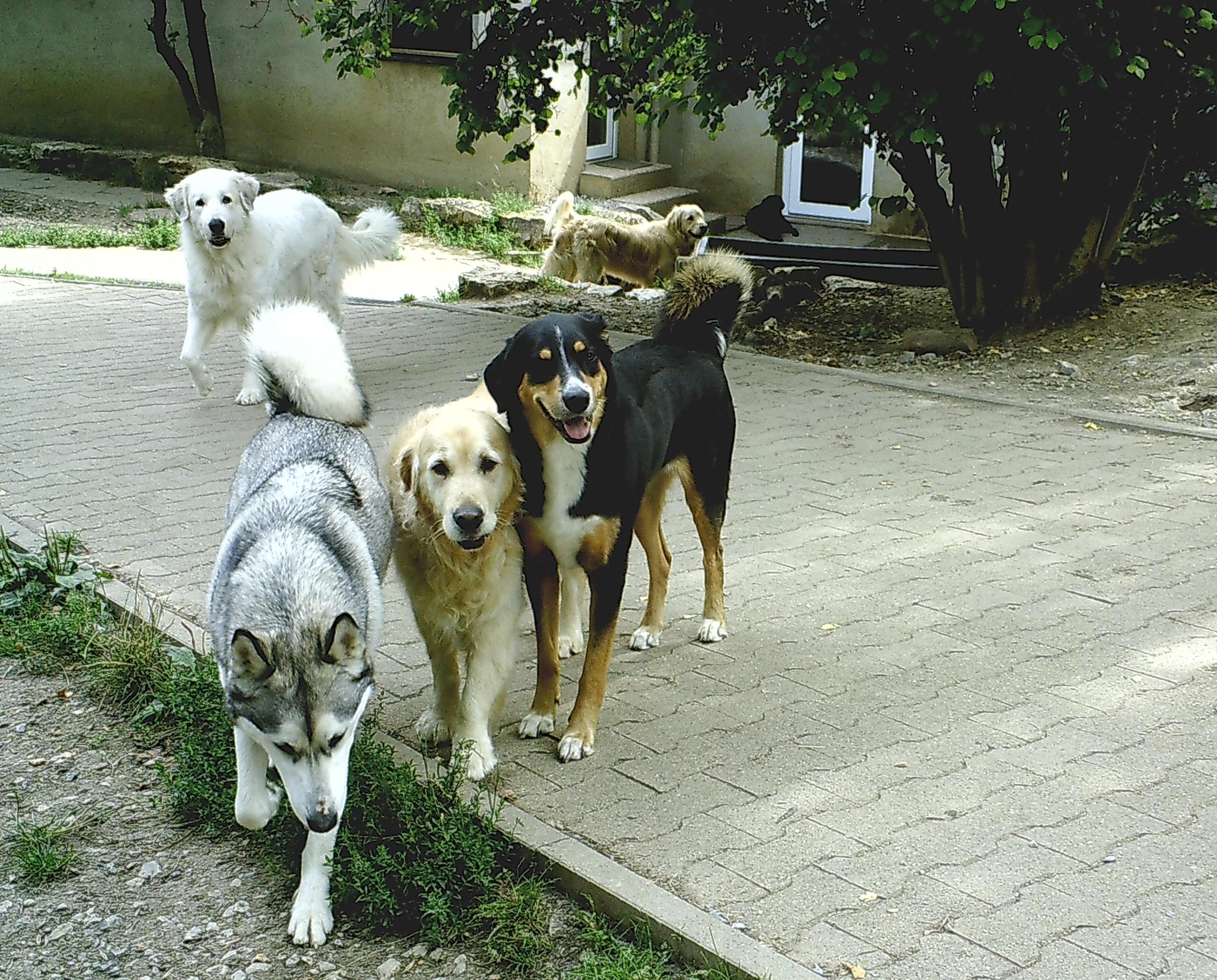hundepension wuff aktuelles3 - Aktuelles