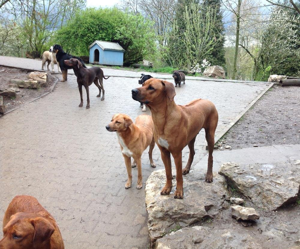 Hundepension Wuff Aktuelles - Home