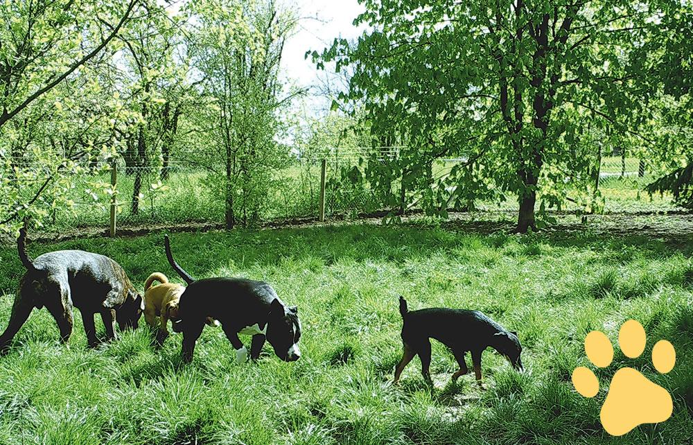 hundepension wuff anfahrt bild - Startseite