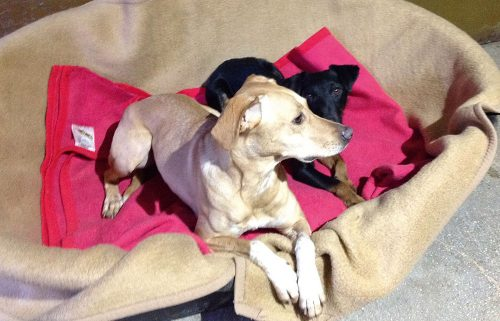 hundepension wuff angebote hunde 1 500x321 - Angebote