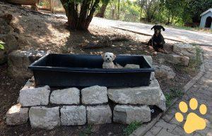 hundepension wuff fragen bild pfote 300x193 - FAQ - Häufig gestellte Fragen