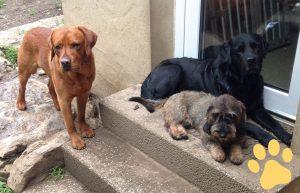 hundepension wuff fragen bild2 pfote 300x193 - FAQ - Häufig gestellte Fragen