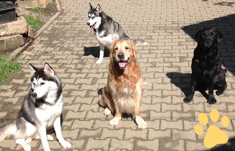 hundepension wuff hundeschule2 bild - Startseite