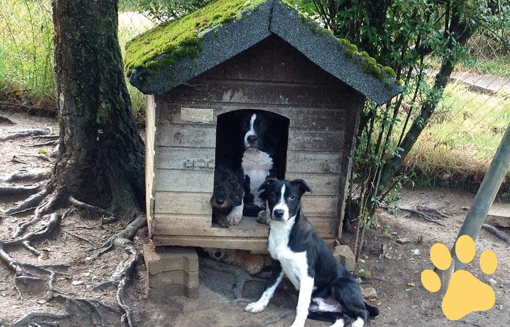 hundepension wuff preise bild 2 - Home