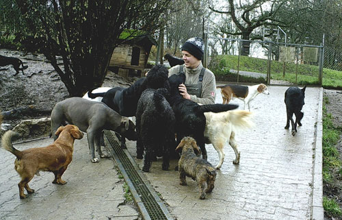 hundepension wuff soziales engagement - Über Uns