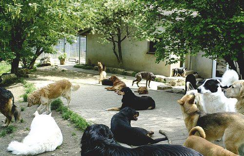 hundepensionwuff geschichte 500x321 - Über Uns