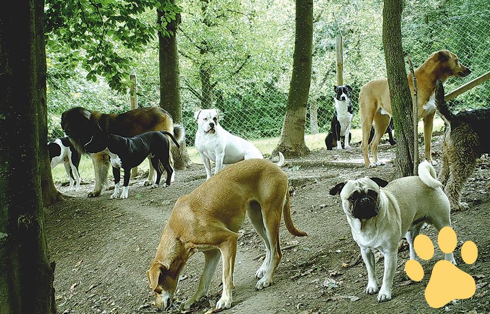 Allgemeine Geschäftsbedingungen - Hundepension Wuff